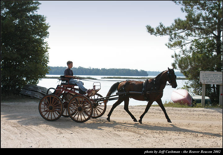 2l_horse_and_buggy_05