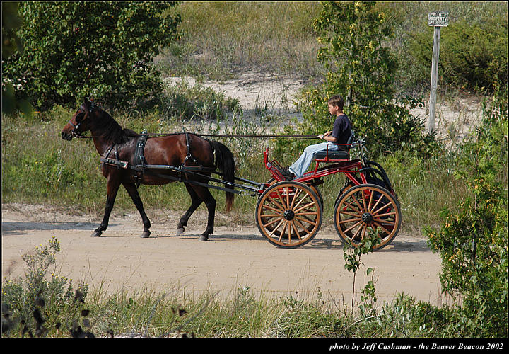 2l_horse_and_buggy_06