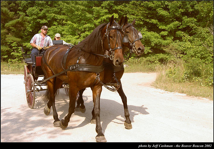 2l_horse_and_buggy_12