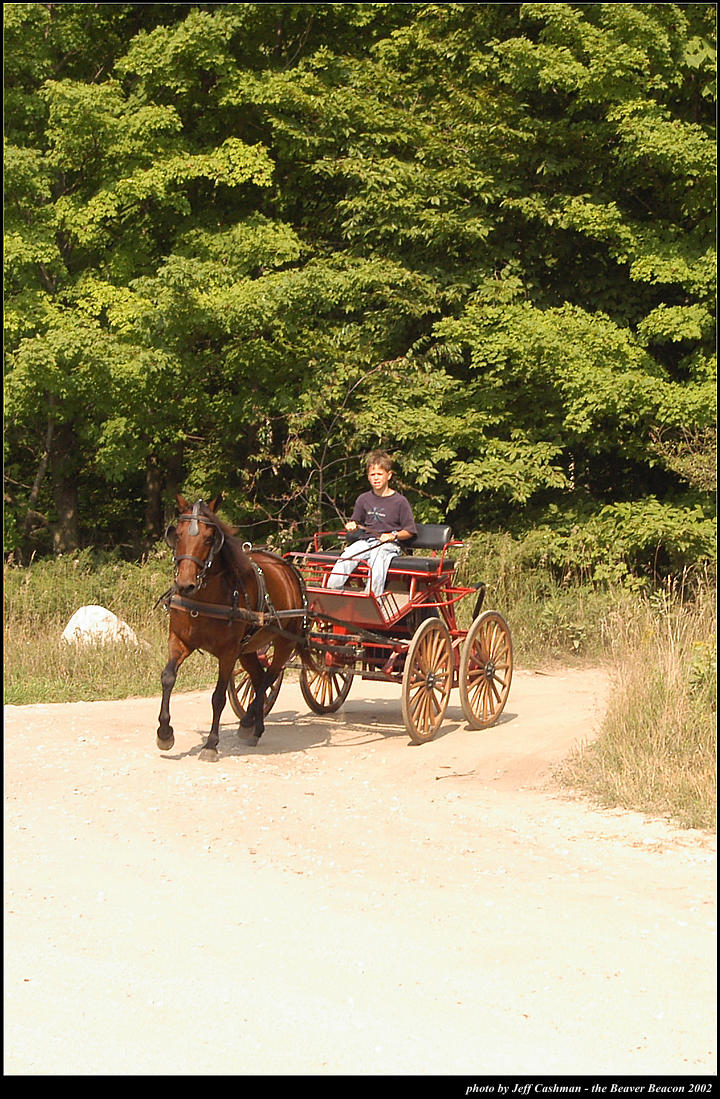 2p_horse_and_buggy_24