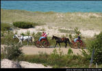 2l_horse_and_buggy_02.jpg