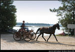 2l_horse_and_buggy_05.jpg