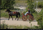 2l_horse_and_buggy_06.jpg