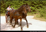 2l_horse_and_buggy_12.jpg