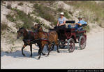 2l_horse_and_buggy_15.jpg