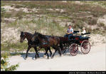 2l_horse_and_buggy_17.jpg