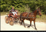 2l_horse_and_buggy_18.jpg