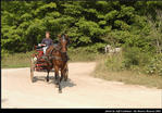 2l_horse_and_buggy_19.jpg