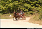 2l_horse_and_buggy_20.jpg