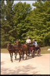 2p_horse_and_buggy_11.jpg