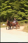 2p_horse_and_buggy_24.jpg