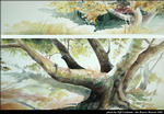 2birch_tree_c.jpg