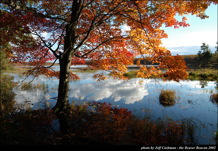 2beaver-island-fall-colors-jeff-cashman-9