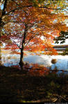 2beaver-island-fall-colors-jeff-cashman-1.jpg
