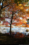 2beaver-island-fall-colors-jeff-cashman-10.jpg