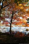 2beaver-island-fall-colors-jeff-cashman-10.jpg
