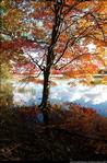2beaver-island-fall-colors-jeff-cashman-15.jpg