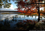 2beaver-island-fall-colors-jeff-cashman-16.jpg