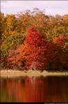 2beaver-island-fall-colors-jeff-cashman-18.jpg