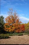 2beaver-island-fall-colors-jeff-cashman-26.jpg