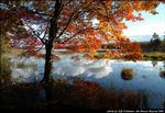 2beaver-island-fall-colors-jeff-cashman-9.jpg