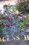12mary-rose-british-isles-9.jpg